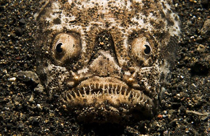 Самые ядовитые рыбы в мире: фото с описанием