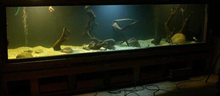 Все в аквариум своими руками