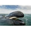 Уже 25 лет этот фотограф документирует жизнь дельфинов и китов.