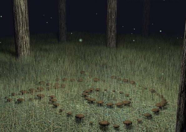 v-lesu-po-krugu